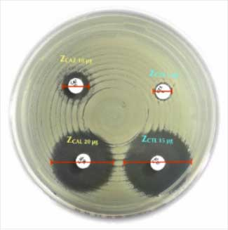 Antibiotic Discs